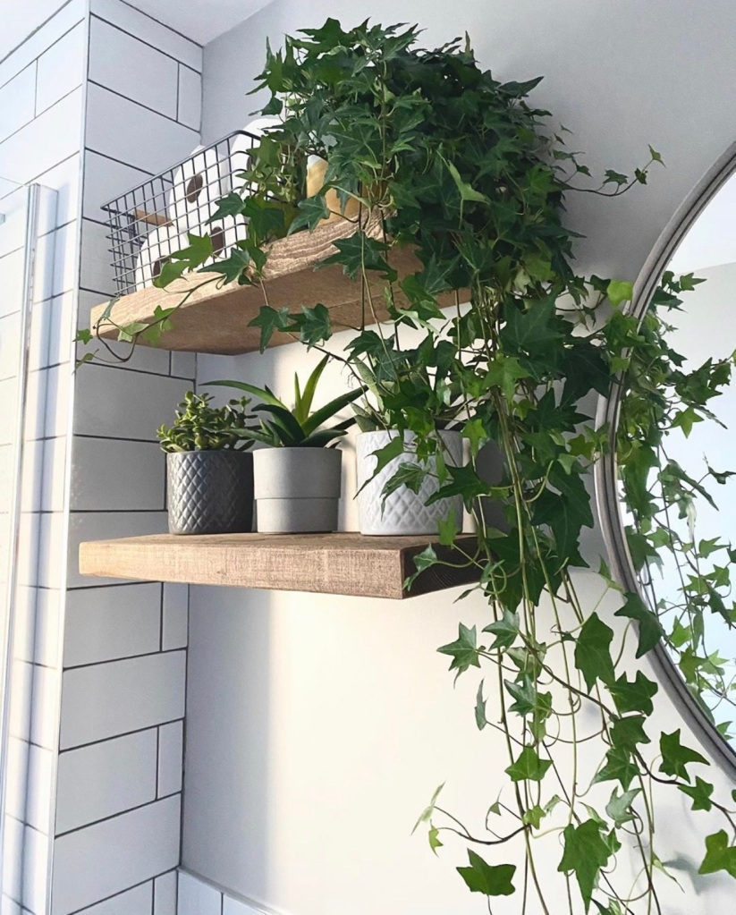 pair of rustic floating shelves in bathroom with houseplant