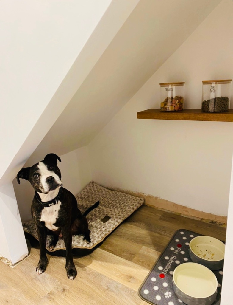staffordshire dog in understairs den with floating shelf.